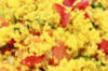 Couscous salade met provençaalse groenten